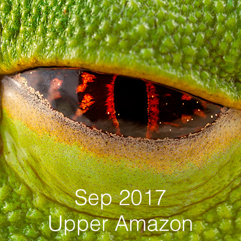 Upper Amazon herping expedition